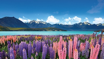 350x200_nz_destination.jpg
