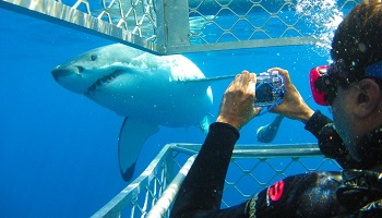 350x200_sharkdiving1.jpg