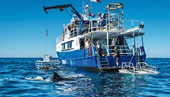 350x200_sharkdiving2.jpg