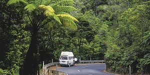 self_drive_Waipoua__Destination_Northland_.jpg
